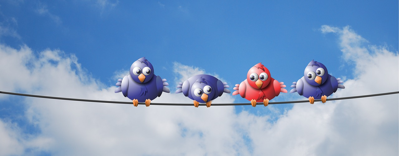 birds on a wire, political humor