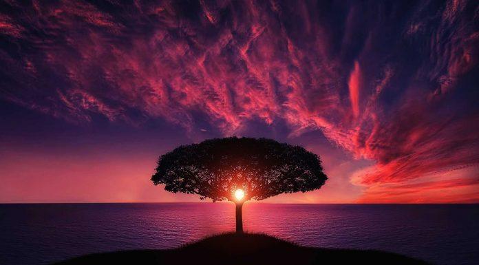 Tree at sunset horizon-future vision