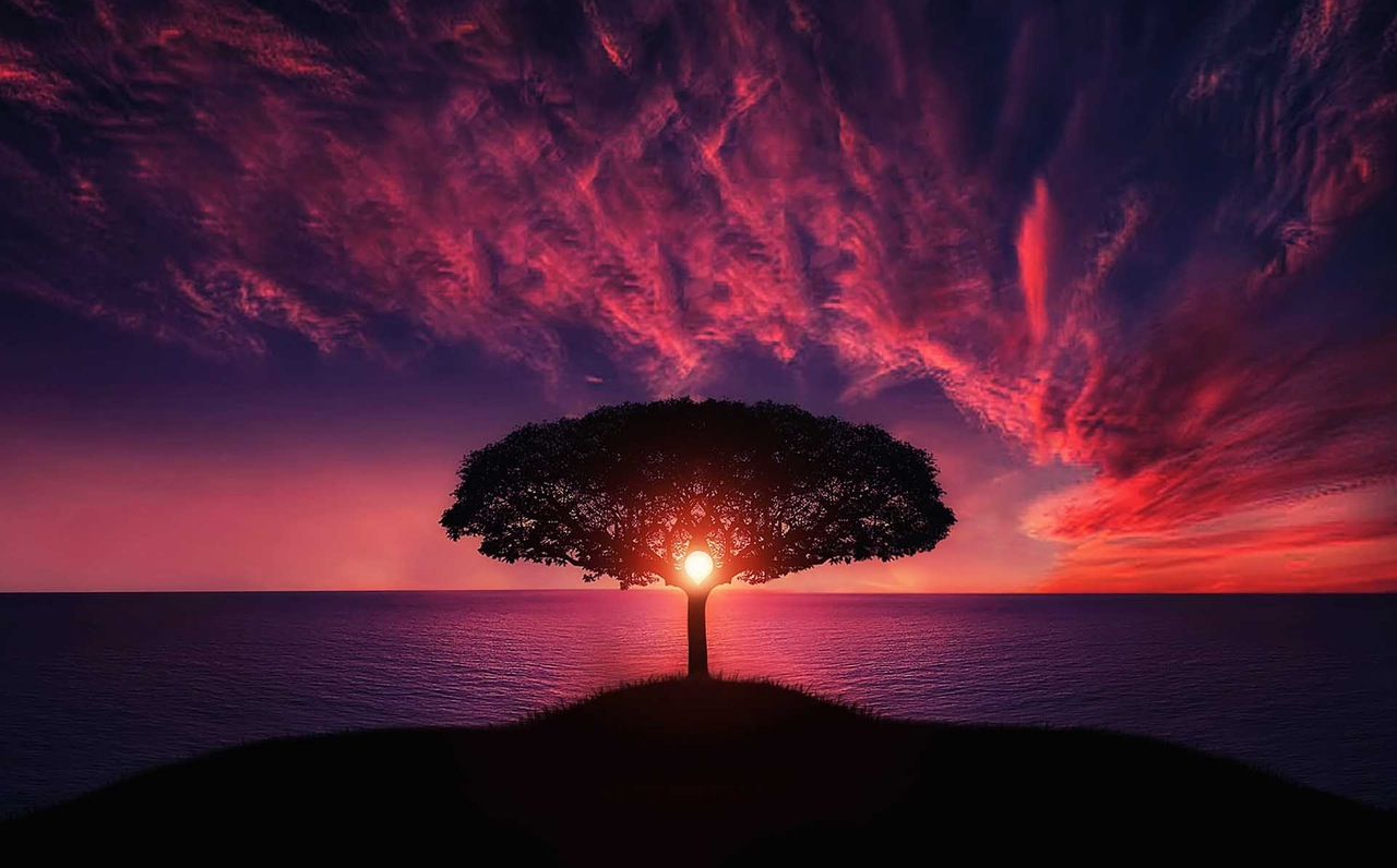 Tree at sunset horizon-future vision